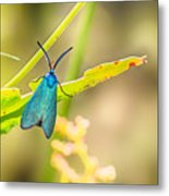 Forester Moth From Bulgaria Metal Print