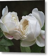 Forever And Always - Desdemona Roses Metal Print