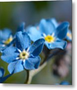 Forget -me-not 3 Metal Print