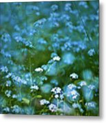 Forget-me-not Flower Patch Metal Print