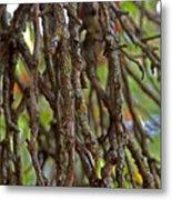 Form Color Texture Pattern Plants 15 Metal Print