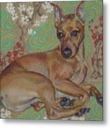 Mini-pinscher Metal Print