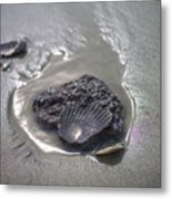Fossil Shell Folly Beach Metal Print