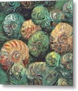Fossil Shells Metal Print