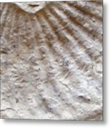 Fossil Three Metal Print
