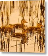 Four Baby Duckies Metal Print
