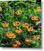 Four Butterflies On Turks Cap Lilies Metal Print