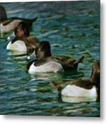 Four Ducks In A Row Metal Print