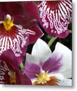 Four Exotic Orchid Blossoms Metal Print