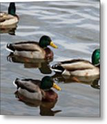 Four Green Heads Metal Print