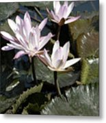 Four Lilies In The Sunlight Metal Print