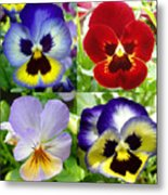 Four Pansies Metal Print