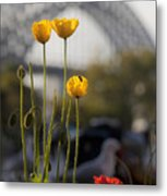 Four Poppies With Harbour Bridge Backdrop Metal Print