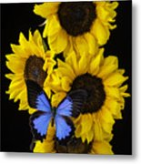 Four Sunflowers And Blue Butterfly Metal Print