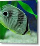 Foureye Butterfly Fish Metal Print