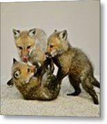 Fox Cubs At Play II Metal Print