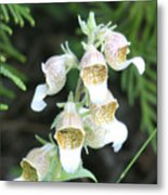 Fox Glove Metal Print