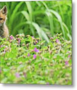 Fox In The Garden Metal Print by Everet Regal