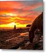 Fox In The Tidepools Metal Print