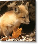 Fox Kit At Entrance To Den Metal Print