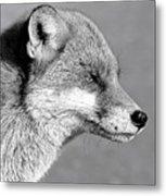 Fox - Mono Metal Print