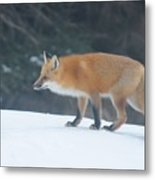Fox On The Prowl Metal Print