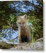 Fox Pup112 Metal Print