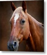 Fox - Quarter Horse Metal Print by Sandy Keeton