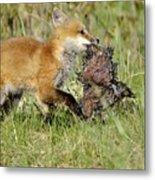 Fox With Dinner Metal Print