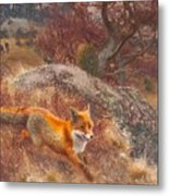 Fox With Hounds Metal Print