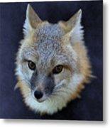 Foxburst Metal Print