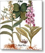 Foxglove And Herb Paris Metal Print
