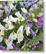 Foxglove Fancy Metal Print