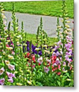 Foxglove In Front Of Conservatory In Golden Gate Park In San Francisco, California  Metal Print
