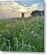 Foxtail Grasses In Glacial Park Metal Print