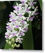 Foxtail Orchid Metal Print