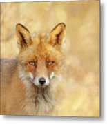 Foxy Faces Series- That Look Metal Print