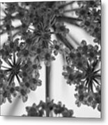 Fractal Flower Photoset 02 Metal Print by Ryan Kelly