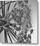 Fractal Flower Photoset 03 Metal Print