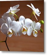 Fragile Orchid  Metal Print