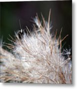 Fragile Seeds Metal Print
