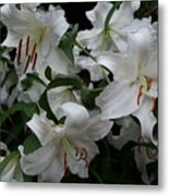 Fragrant Beauties Metal Print