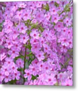 Fragrant Phlox Metal Print
