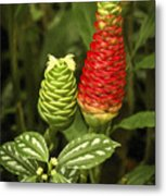 Fragrant Red Metal Print