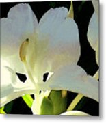 Fragrant White Ginger Metal Print by James Temple