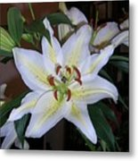 Fragrant White Lily Metal Print
