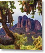 Framed By Cholla Metal Print