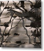 France, Paris, Tree Branches Reflected Metal Print