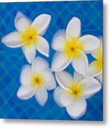Frangipani Flowers In Water Metal Print