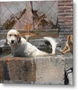 Frank And Chum Metal Print